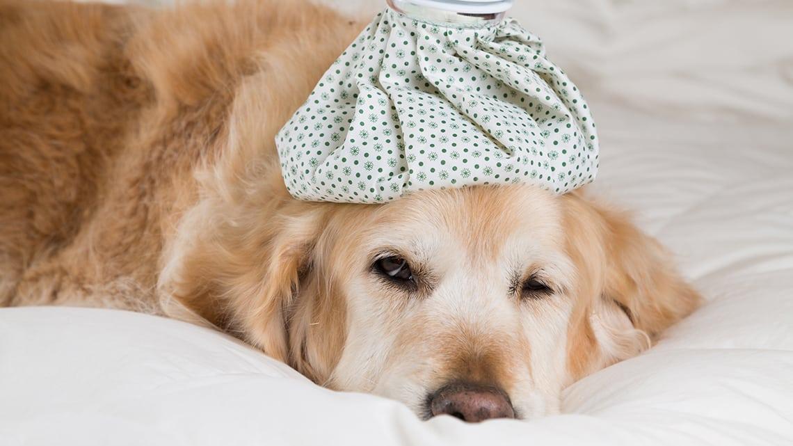 infiammazione dello stomaco e perdita di peso nei cani