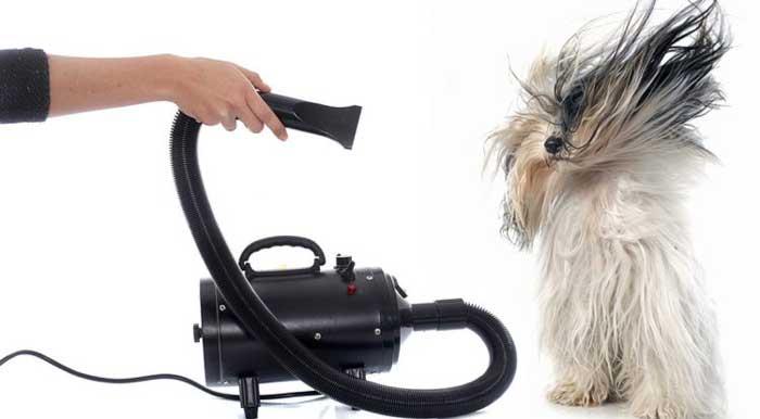Asciugare il cane dopo il bagnetto