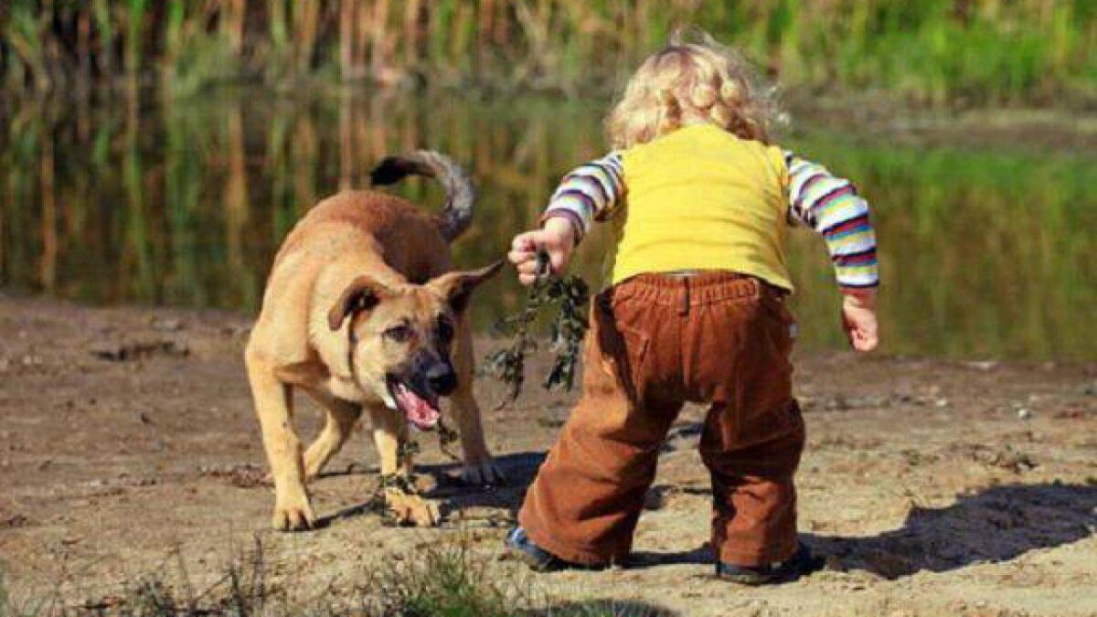 bambino ha paura del cane