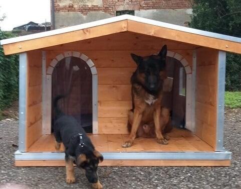 2 cucce per cani