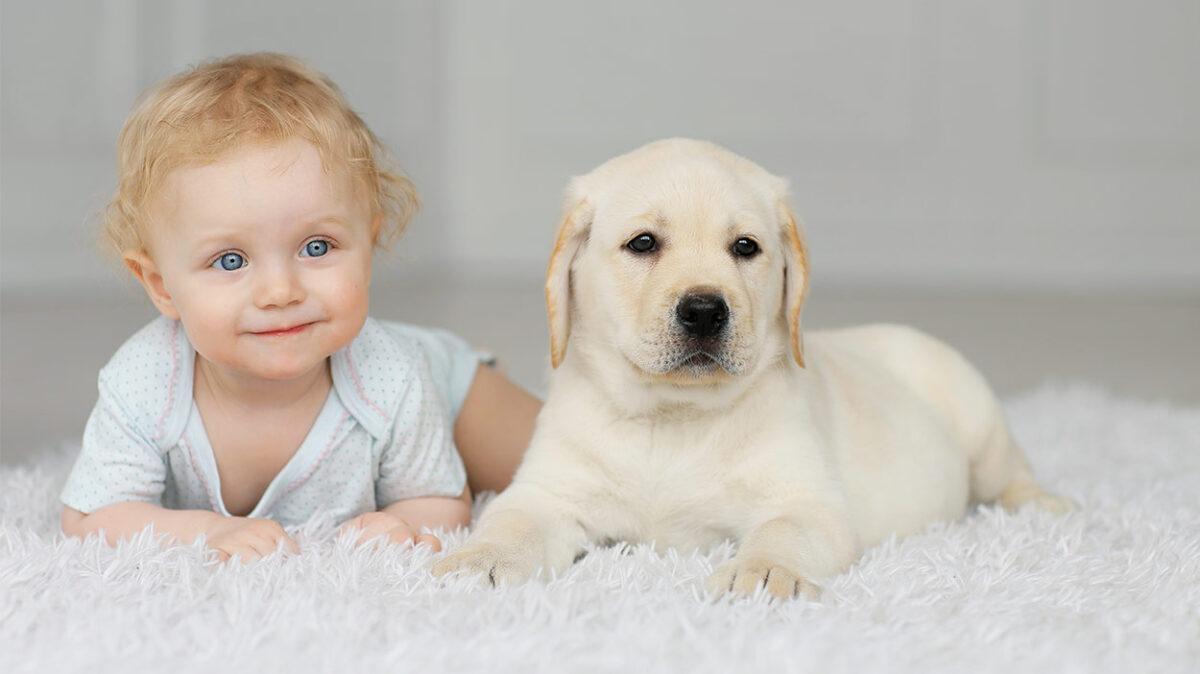 labrador con un bambino