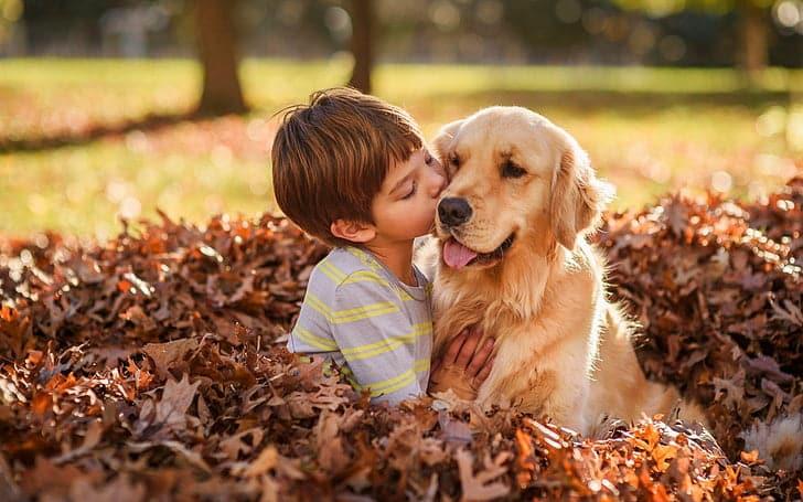 Golden retriever con i bambini