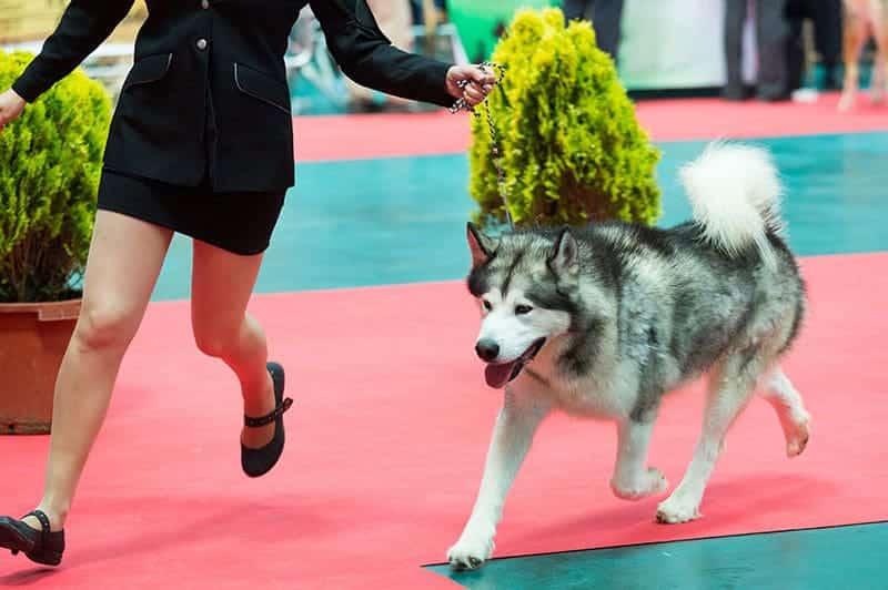 esposizioni canine