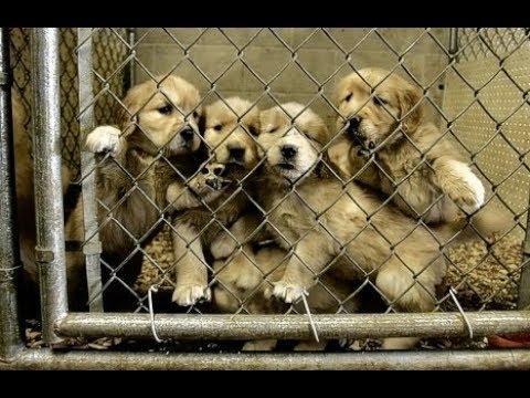 Fabbriche dei cuccioli