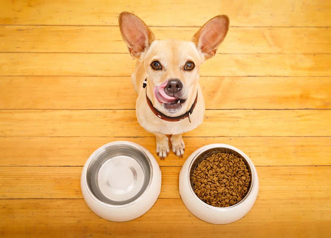 Cucciolo che mangia e beve