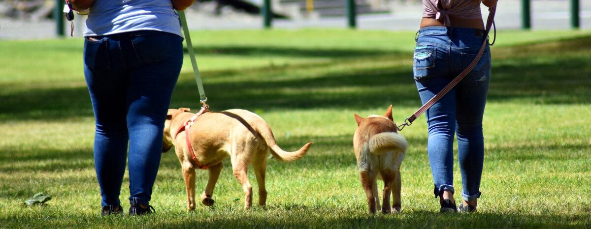 passeggiate coi cani