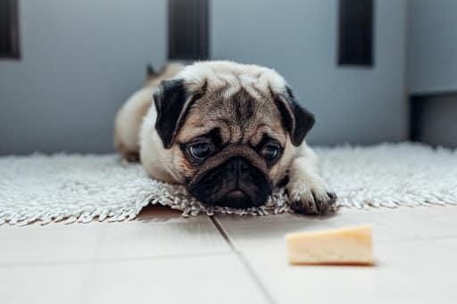 Formaggio al cane Carlino