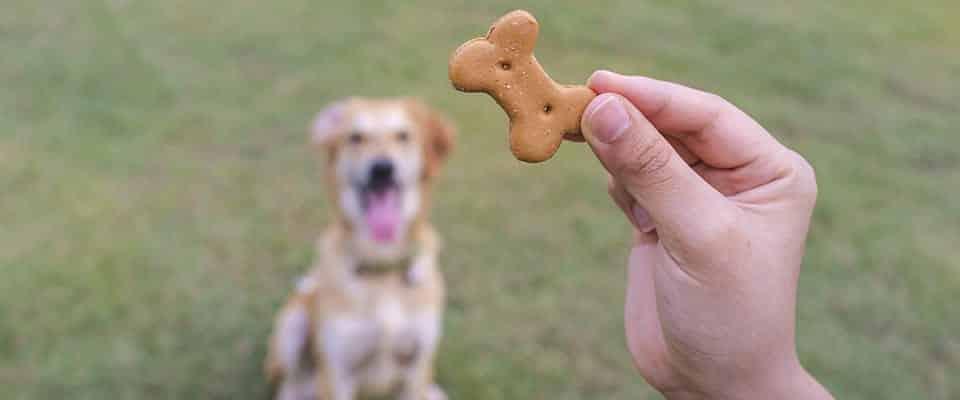 biscotto per il cane